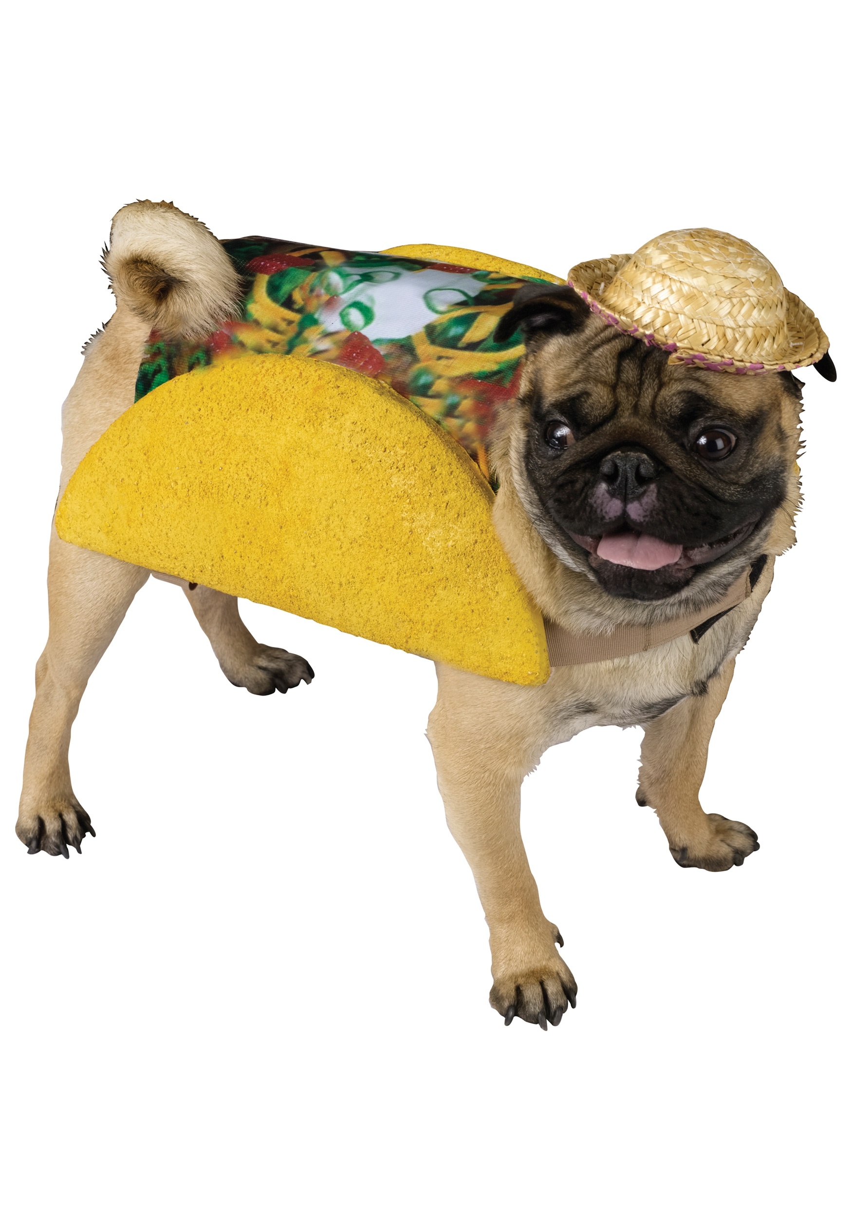 10 Dogs Who Are Psyched For Cinco De Mayo.