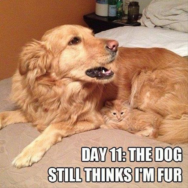 Cats vs. Dogs!