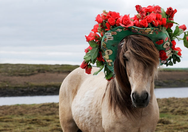 10 Horses Wearing Kentucky Derby Hats