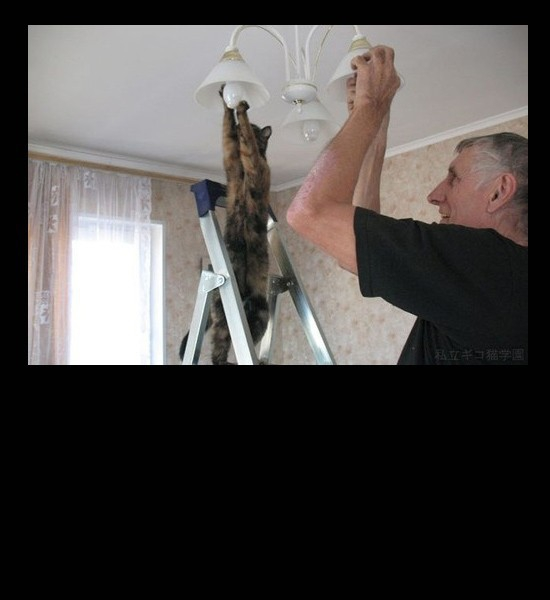 How Many Cats And Humans Does It Take To Change A Lightbulb?