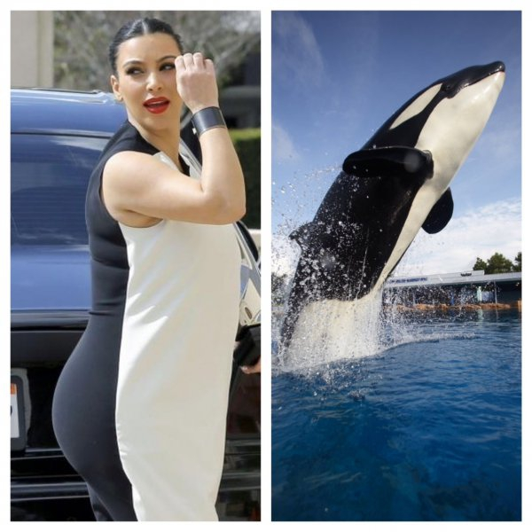 Kim Kardashian or Killer Whale