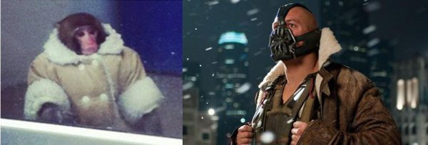 IKEA Monkey or Bane