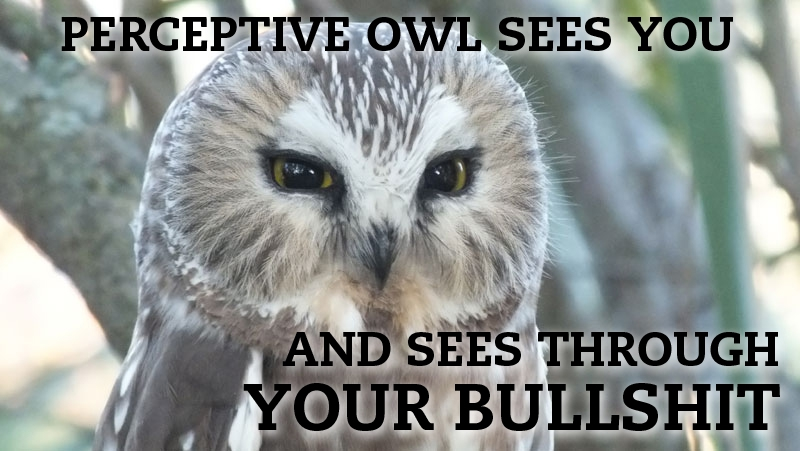 Hilariously Adorable Owl Memes.