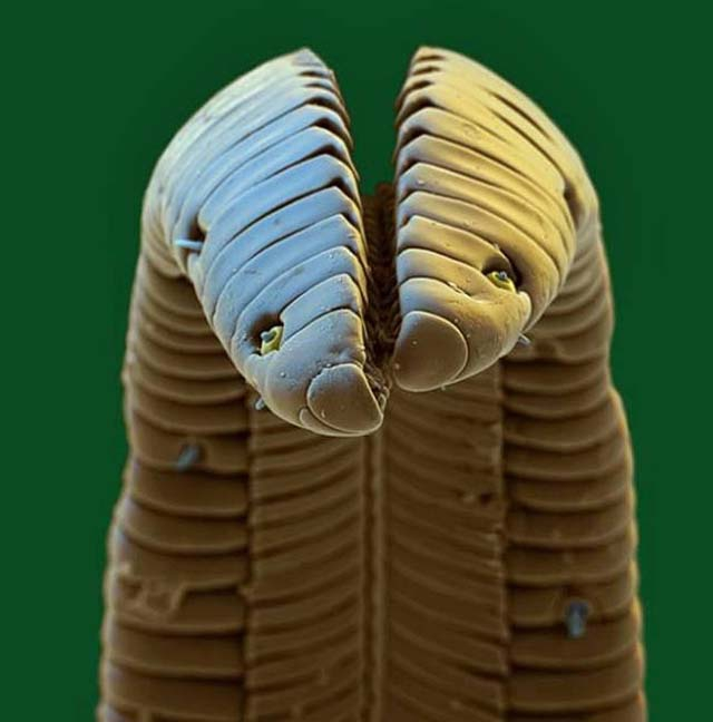 10 Incredible, Magnified Images That Will Blow Your Mind!