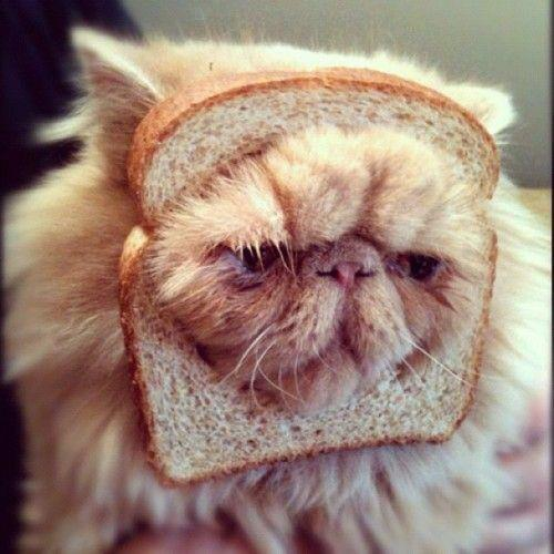 "8. And we made this one an ""in bread"" cat just so we could make an awful pun"