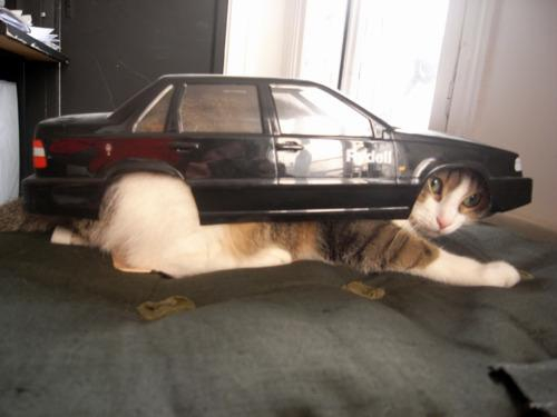 20. This cat that clearly isn't a car
