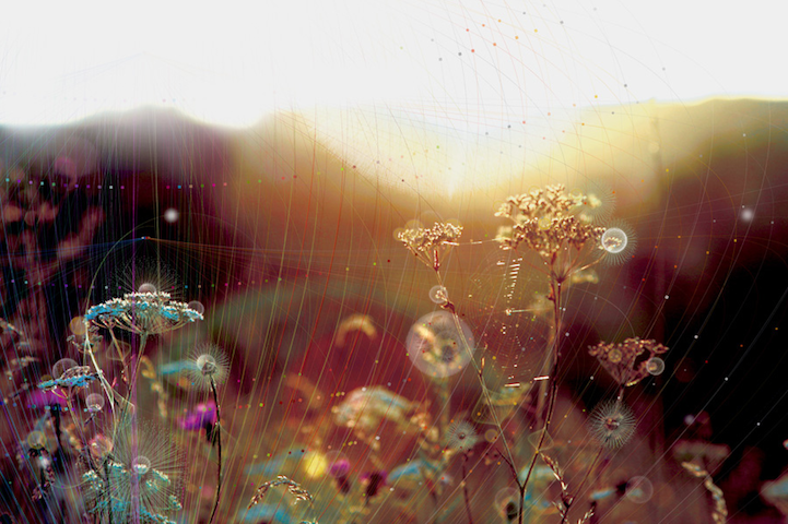 Digital Cobwebs Magnificently Beautify Nature