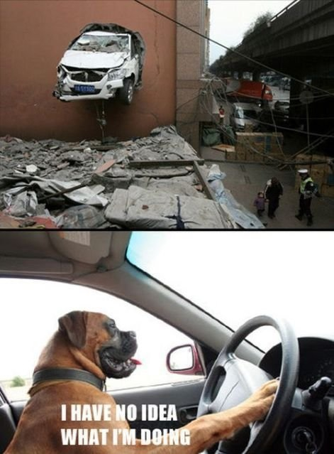 Dogs Saying 'I Have No Idea What I'm Doing'
