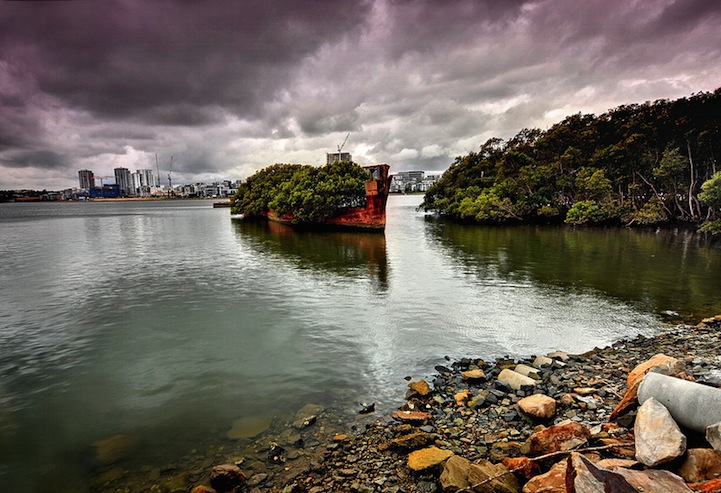 Floating forest of Homebush Bay