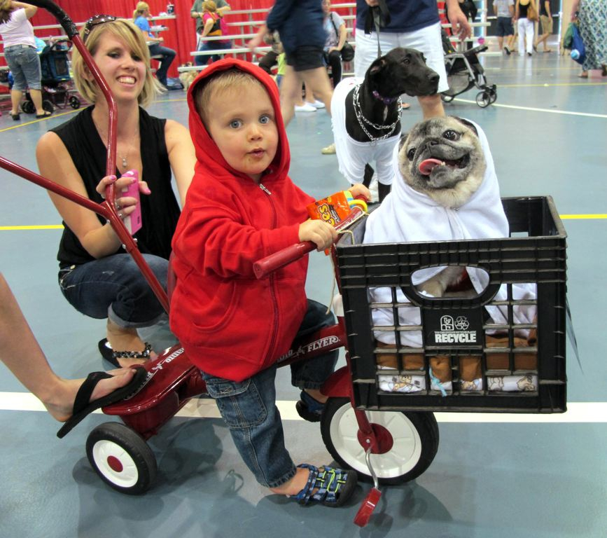 Lucas Purdy, 1, and Peke the pug won first place in one of the costume contests