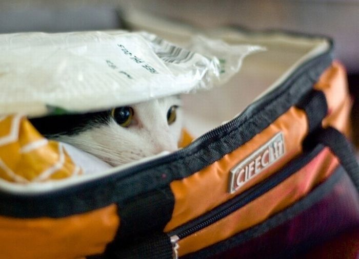 Cats Who Failed At Hide-And-Seek