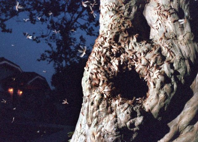 Gross and Creepy Termite Swarm