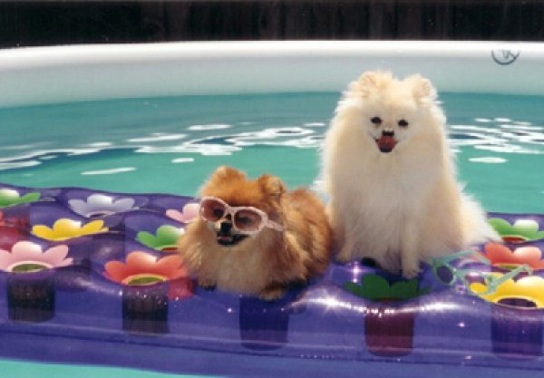 Floating Puppies