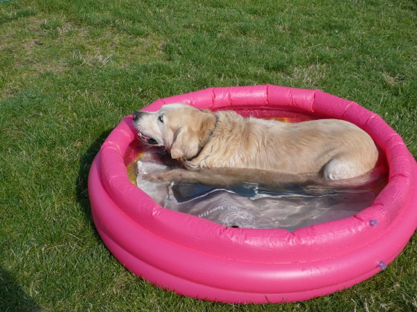 Relaxing In The Kiddie Pool