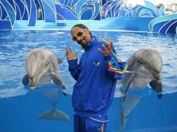 Snoop Dogg working on a collaboration with two dolphins: