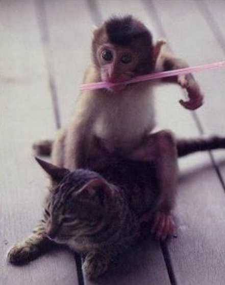Monkey Riding Cat