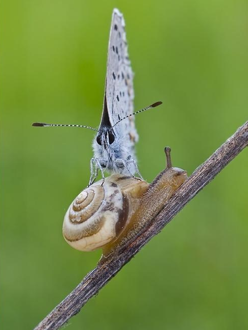 Butterfly Riding Snail