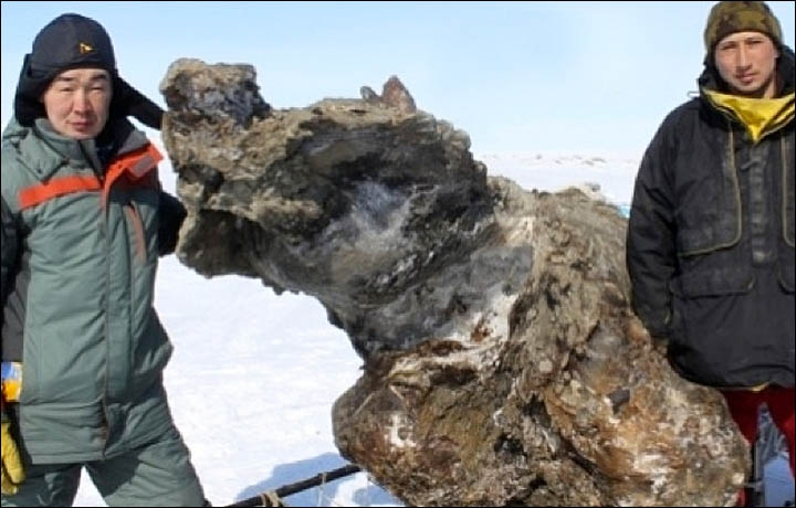 Mammoth Blood Found In A Well Preserved Carcass! Is Cloning On The Horizon?