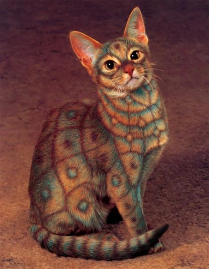 Catpainting: a new Animal's Art Style