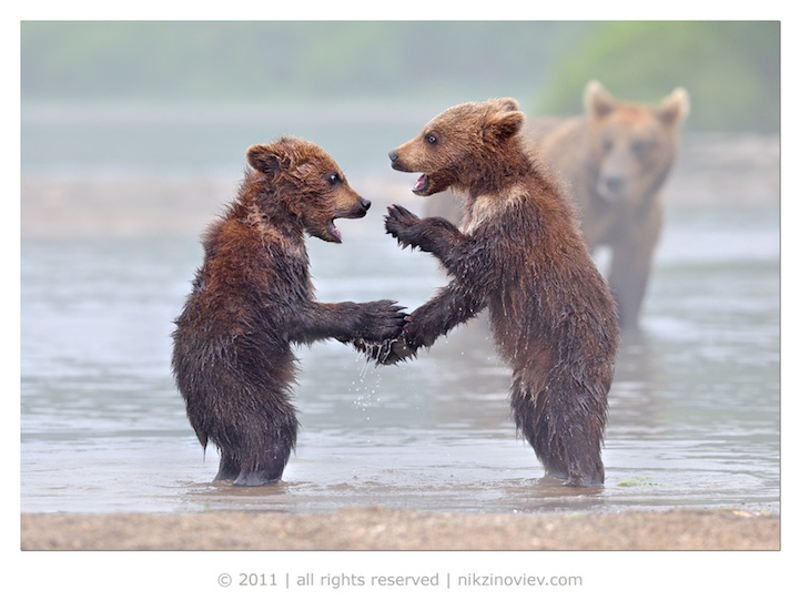 Hilarious and Heartwarming Photos of Animals as Friends