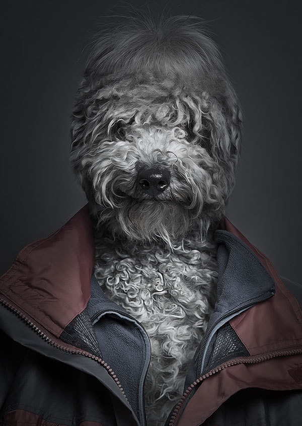 Funny Portraits of Dogs Dressed Like Humans