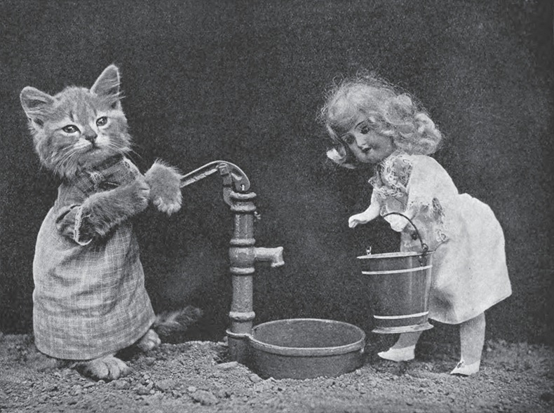 LOLCats From Yesteryears: Photographs by Harry Whittier Frees