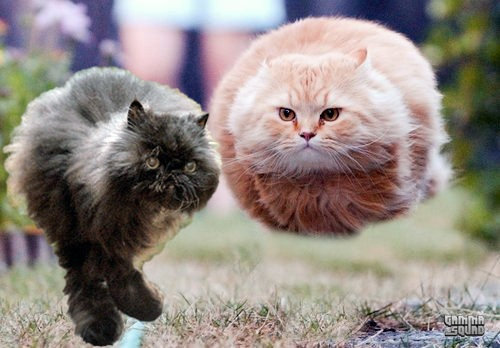 This Adorably Fluffy Two-Legged Cat Is The Real-Life Hovercat
