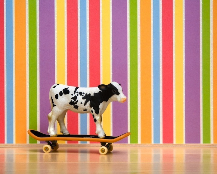 The Secret Life of Plastic Toy Animals