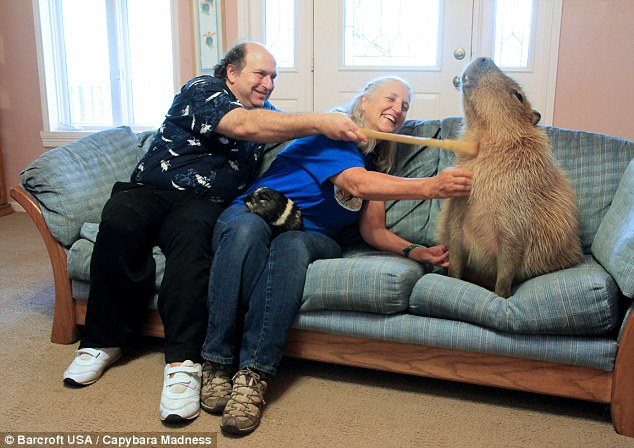 Melanie and her husband Richard Loveman give Gary a bit of attention on the couch at their Texas home