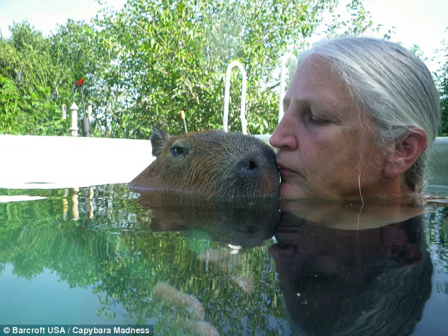 Ms Typaldos said she fell in love with Gary the capybara and that he quickly became part of the family