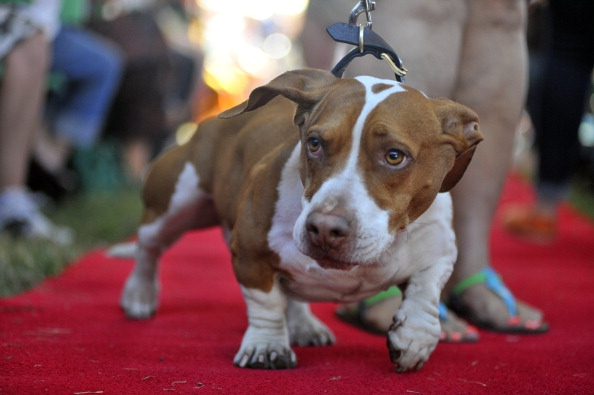 The 'World's Ugliest Dog' Is Actually Adorable