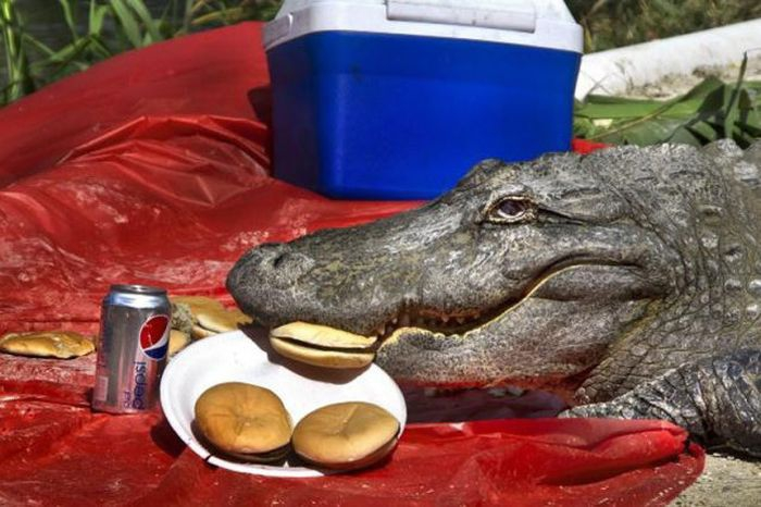 Picnic in Florida