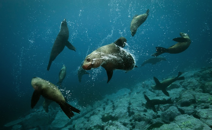 Happiness-Inducing Photos of Australian Fur Seals