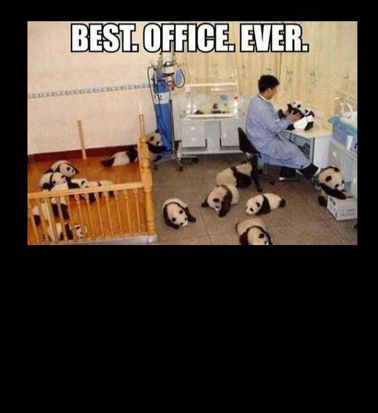Best Office Ever!! Pandas!