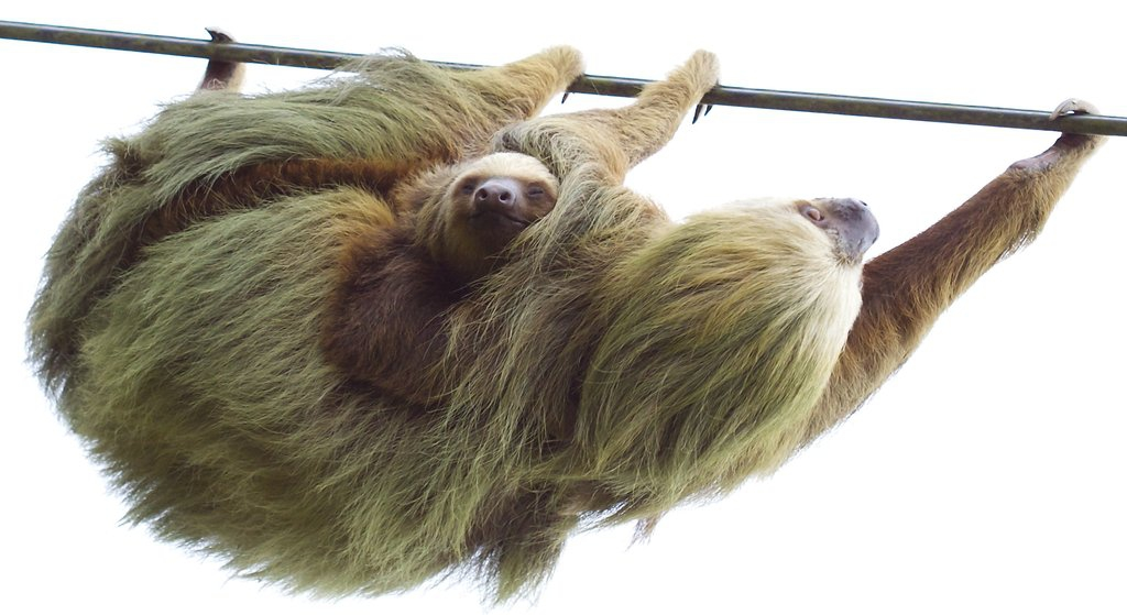 Sloth adventures in Costa Rica!