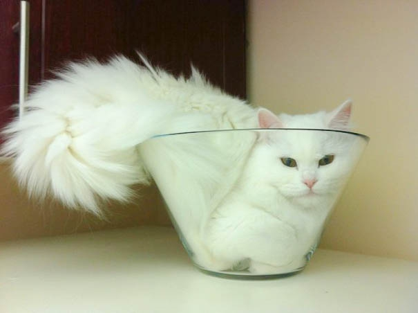 15 Proofs That Cats Are Liquids