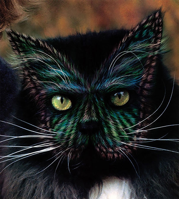 Controversial Pictures of Painted Cats
