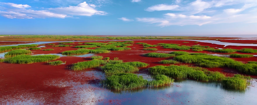 Incredible Red Beach in Panjin, China