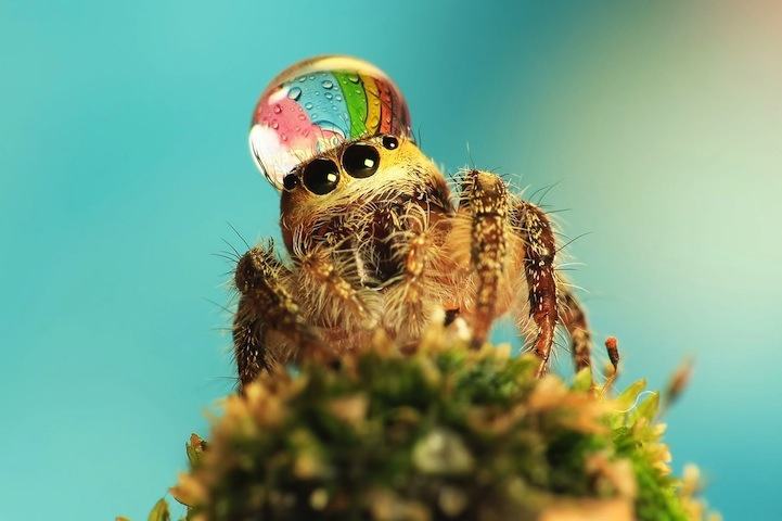 Silly Photos of Spiders Wearing Water Droplets as Hats