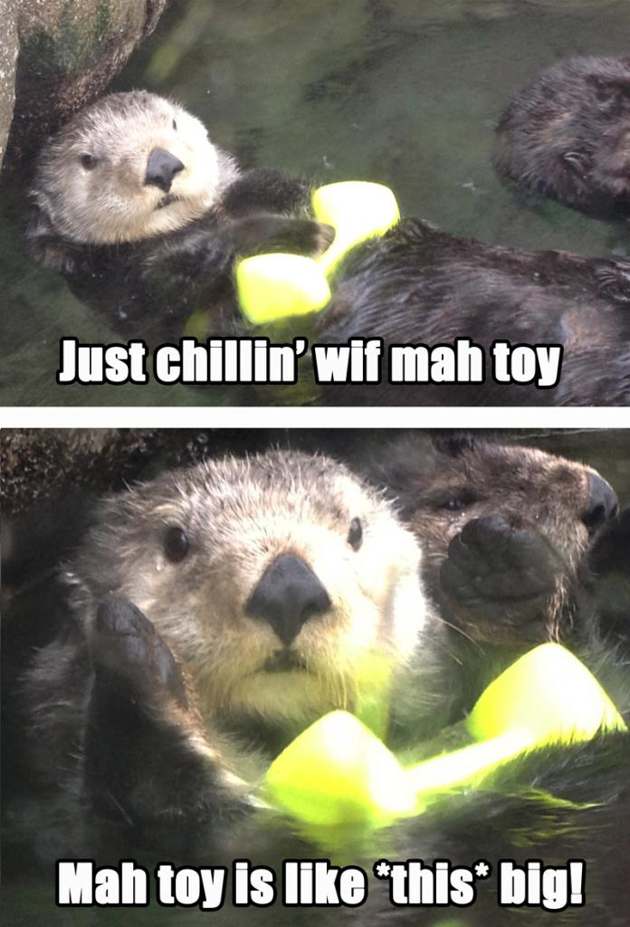 Otterly Cute!
