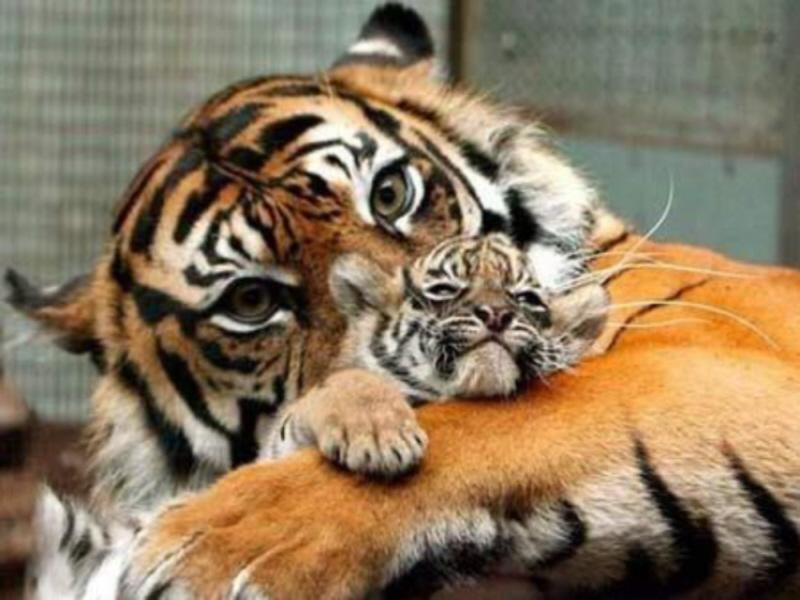 Animals Being Awesome Moms.