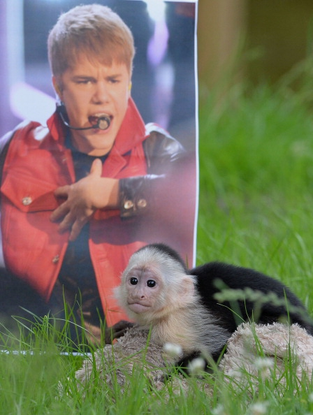 Justin Bieber's Monkey Finally Has A New Home