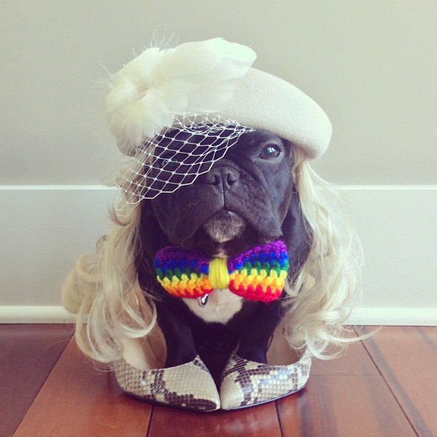 Meet Trotter: The French Bulldog That's a Master of Disguise