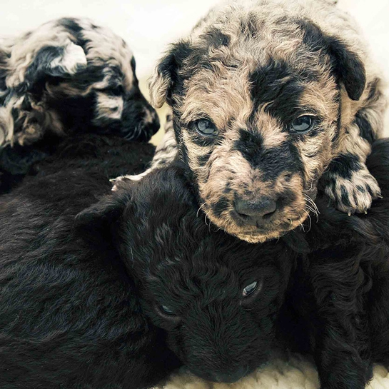 Newborn Puppies, By Traer Scott. Cuteness Overload!