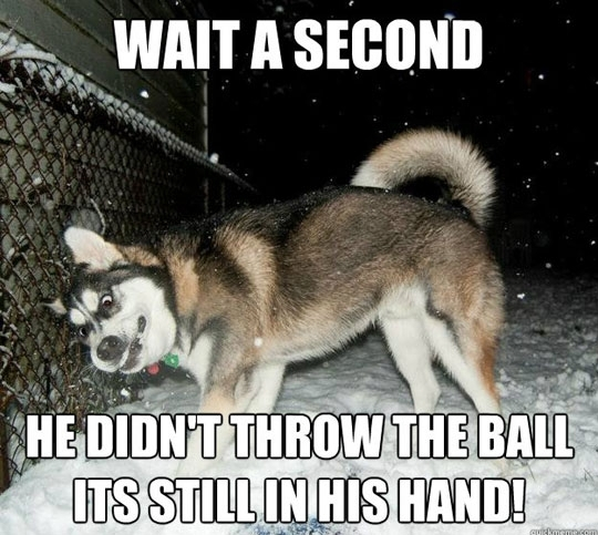 Cheer Up With Some Awesome Husky Memes!
