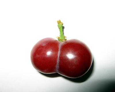 Perverted Fruits! WARNING (X-Rated)