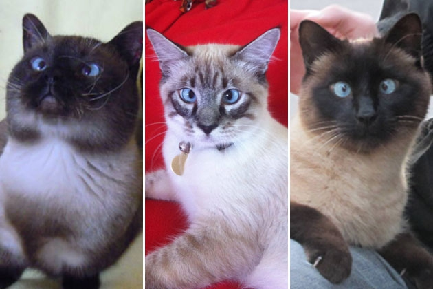 12 Cross Eyed Kitties to Make Your Day