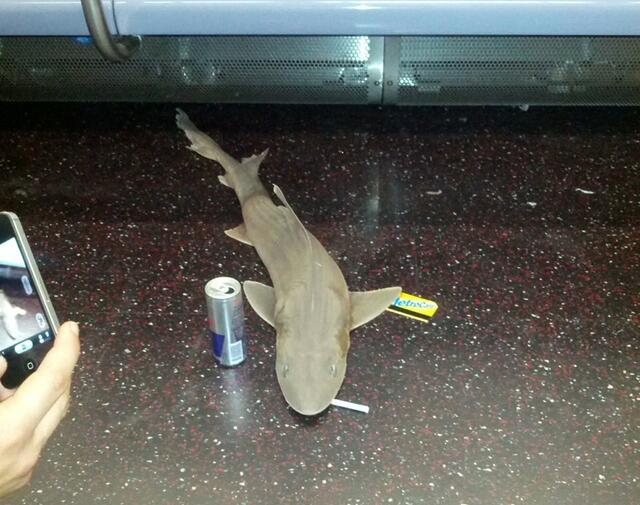 A Dead Shark Has Been Found On The New York City Subway