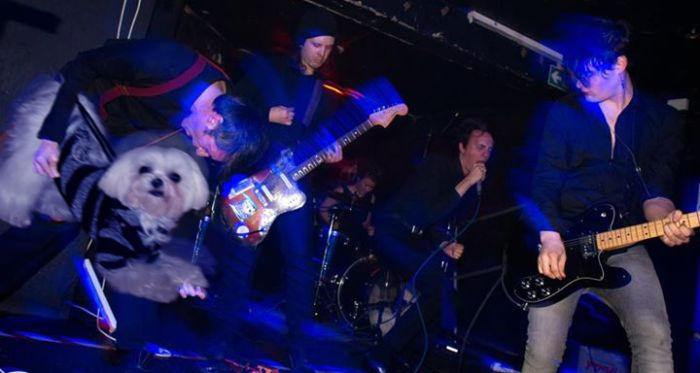 Bass Guitars Replaced by Dogs