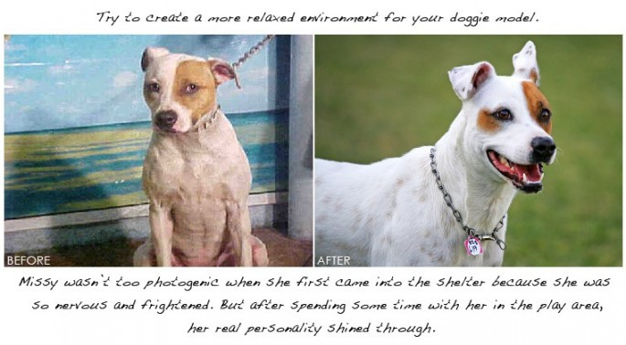How to photograph cats and dogs to improve their chances of adoption